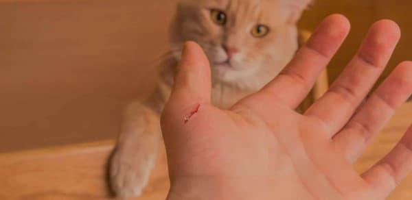 Penyakit Cakaran Kucing