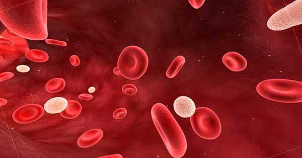 Leucocytose